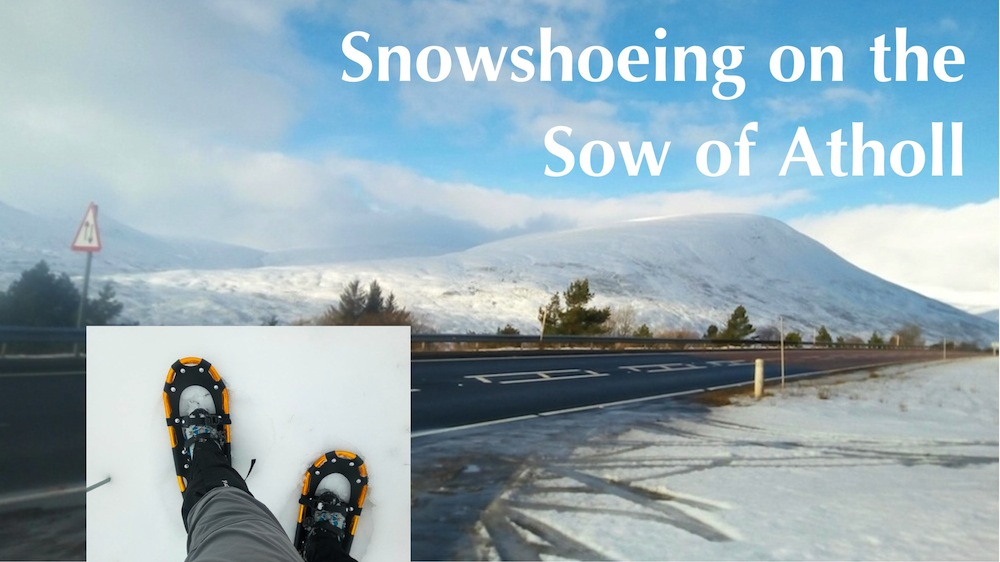 Snowshoeing into the Year of the Pig